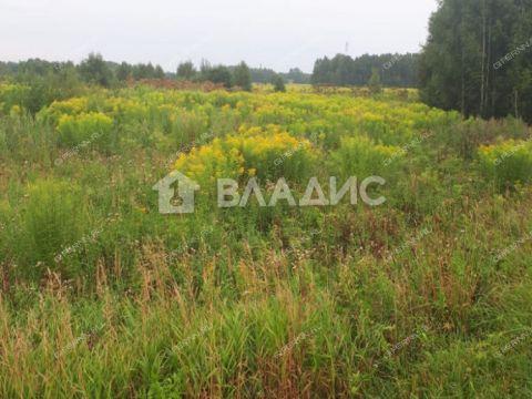 selo-zinyaki-gorodeckiy-rayon фото